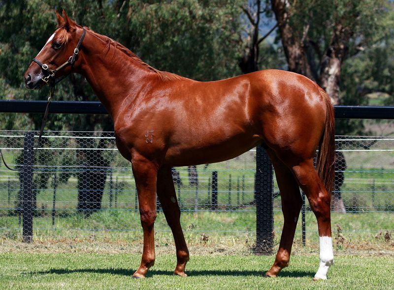 Seeingisbelieving at 2016 Classic Yearling Sale