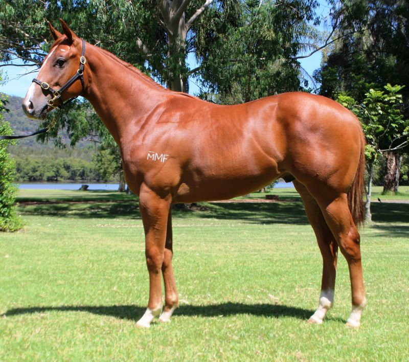 Seawatch at 2016 Classic Yearling Sale