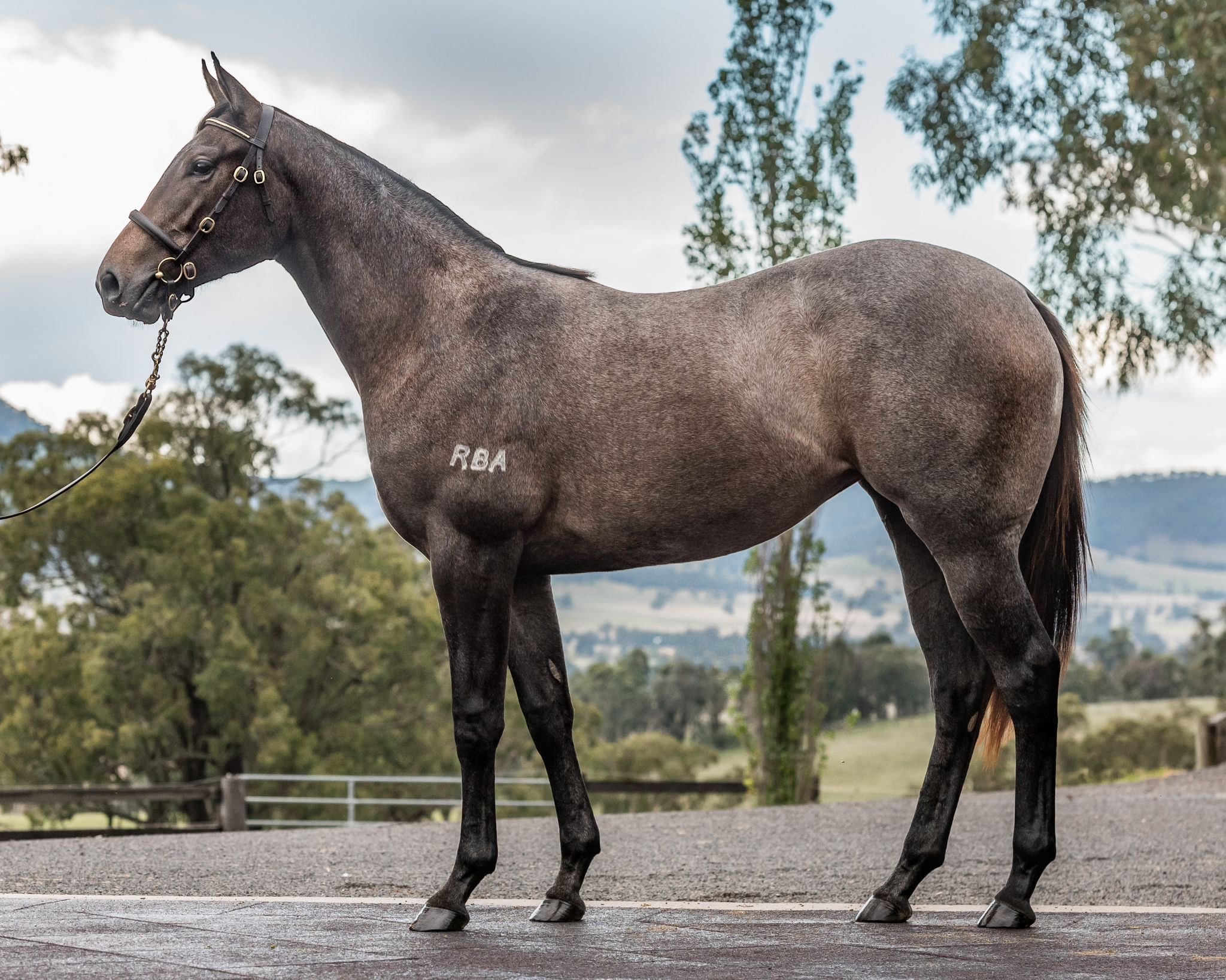 Pearl Roan at 2017 Scone Yearling Sale