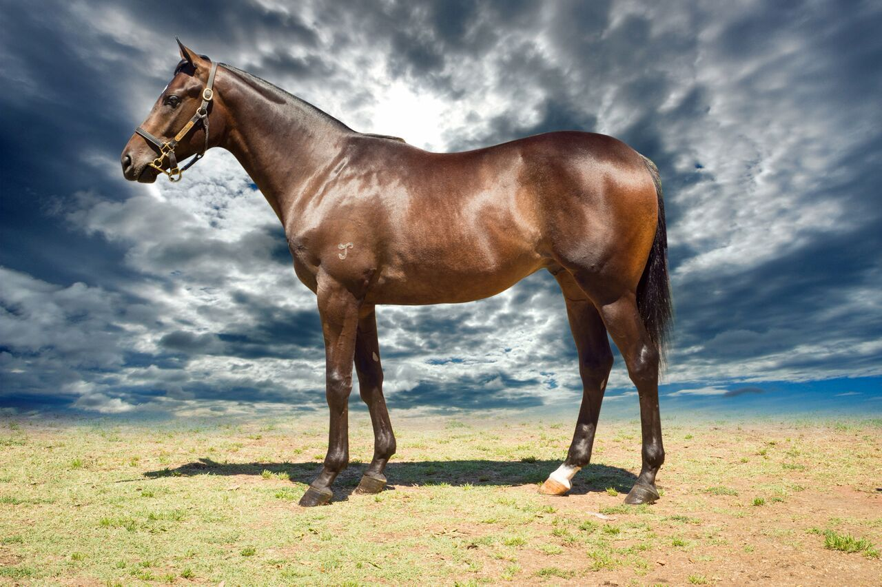 Highly Intrusive at 2017 Melbourne Premier Yearling Sale