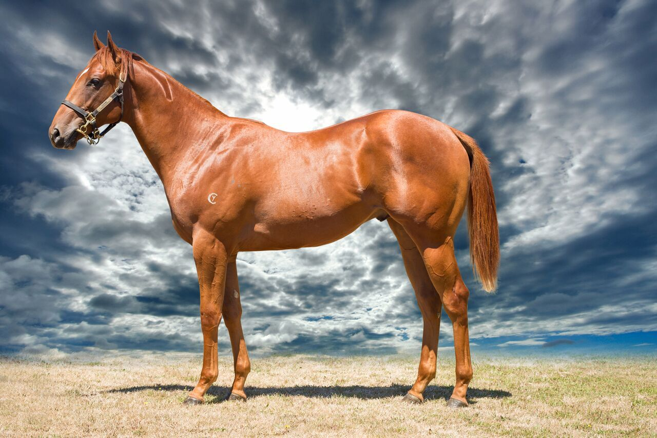 Zipspur at 2017 Melbourne Premier Yearling Sale