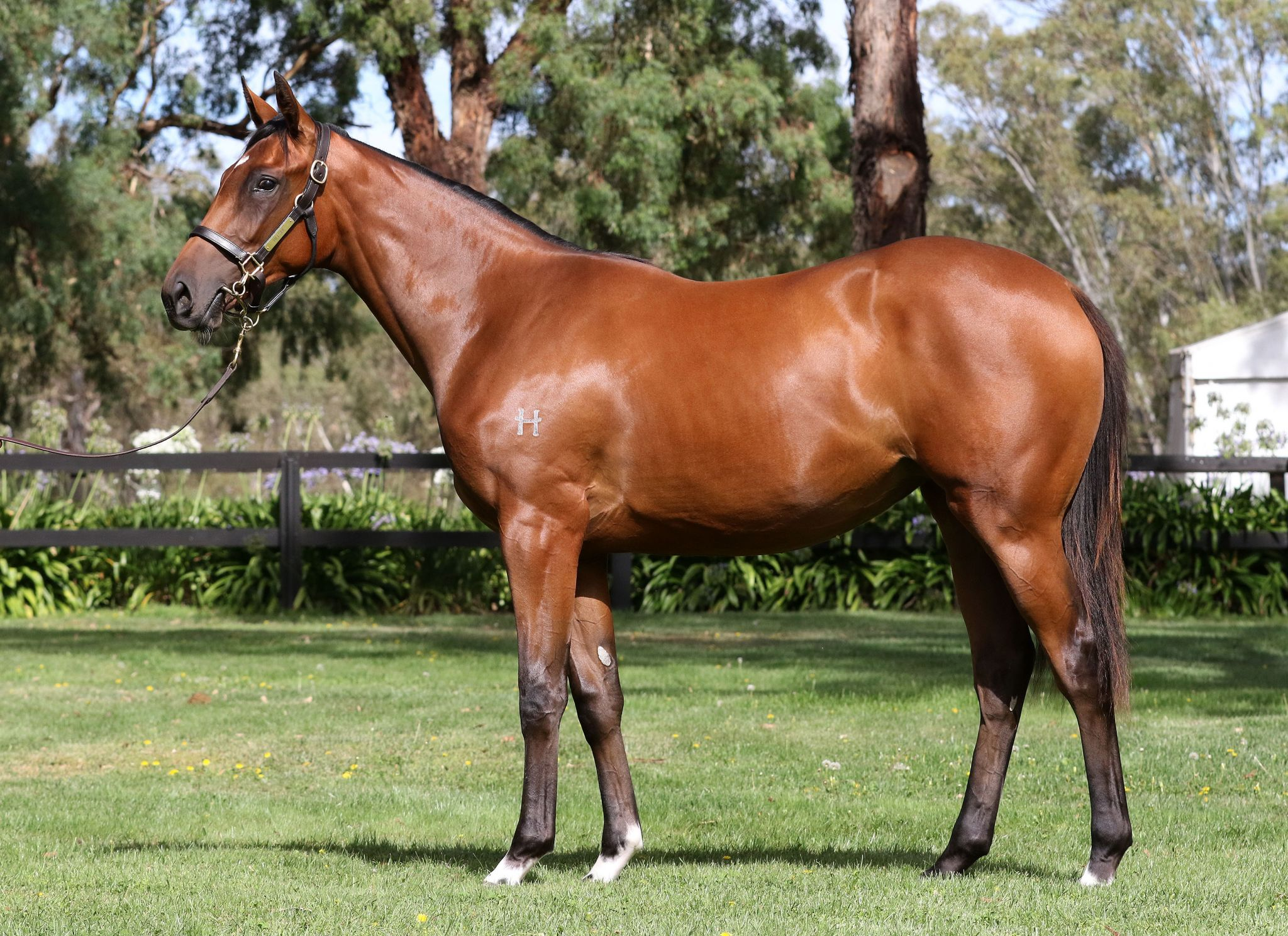 Eliabella at 2017 Melbourne Premier Yearling Sale