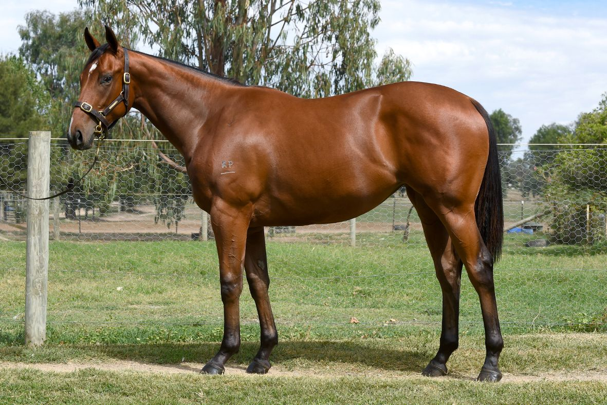 Miss Scorcher at 2017 Melbourne Premier Yearling Sale