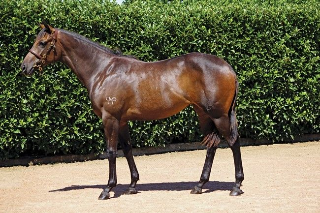 Covert Miss at 2017 Melbourne Premier Yearling Sale