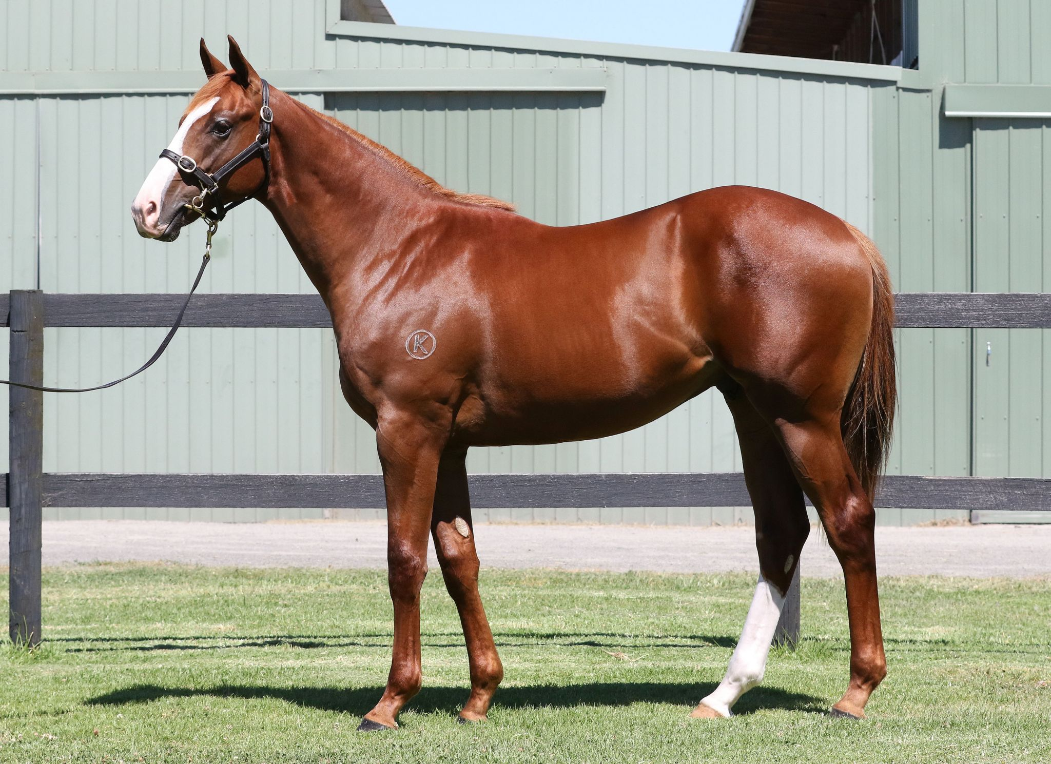 Polanco at 2017 Classic Yearling Sale