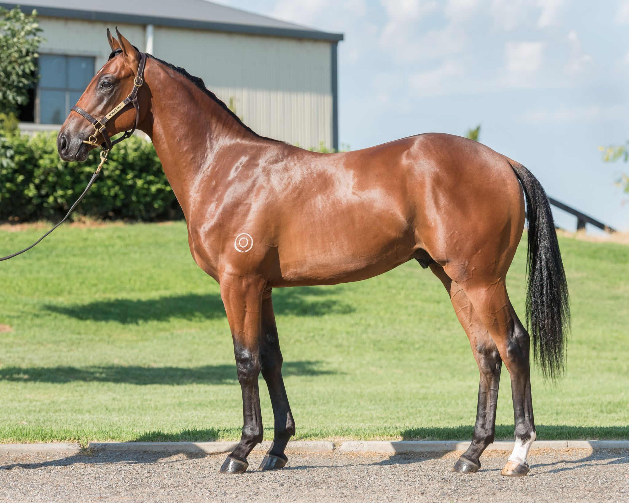 Myvatn at 2017 Classic Yearling Sale