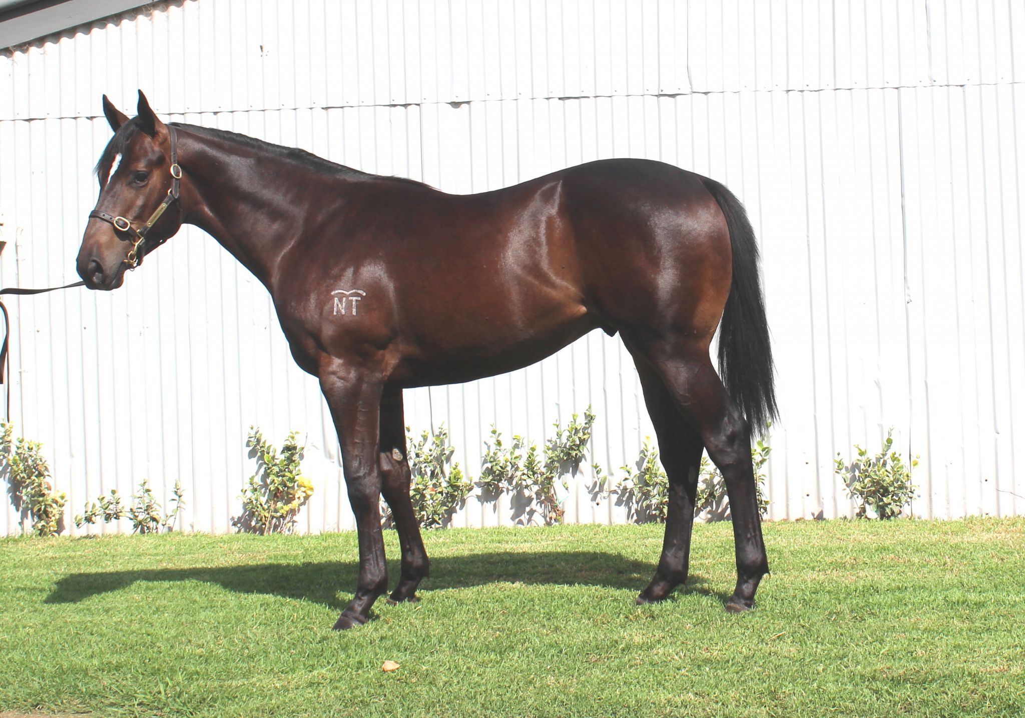 Beauty Spark at 2017 Classic Yearling Sale