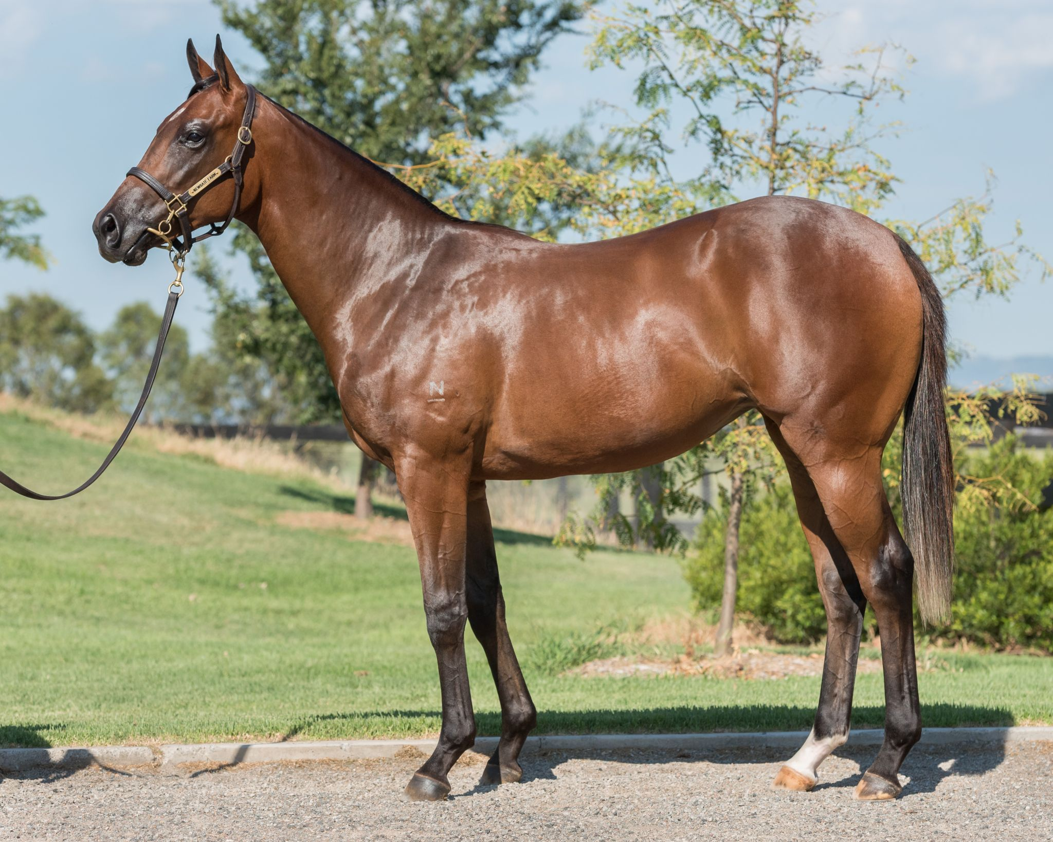 La Mer Celtique at 2017 Classic Yearling Sale