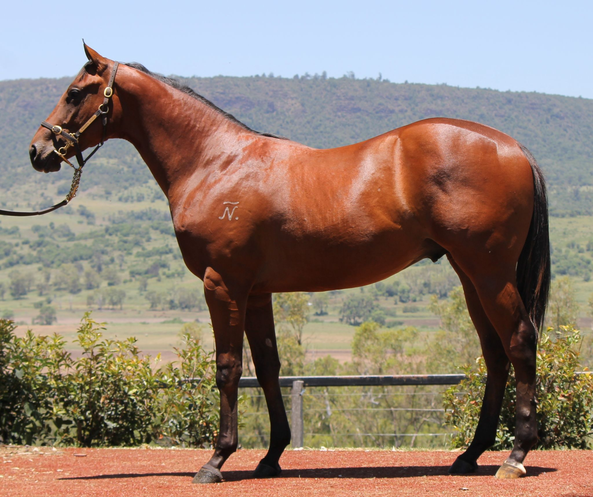 Golden Dice at 2017 Classic Yearling Sale