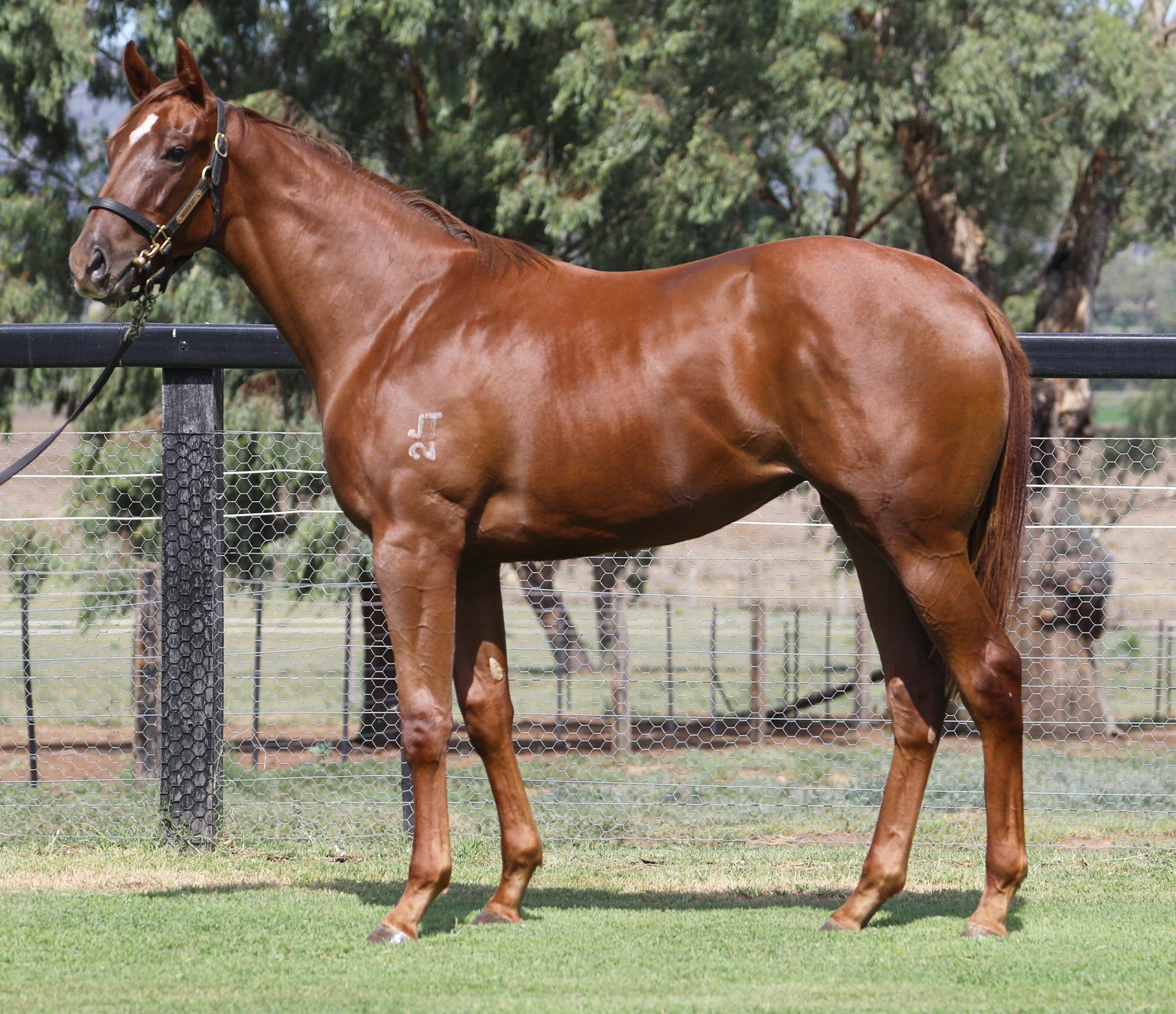 Two Seas at 2017 Classic Yearling Sale