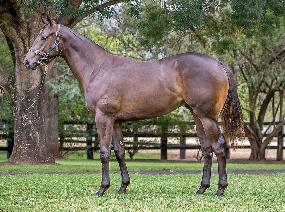 Arthur In Charge at 2018 Classic Yearling Sale