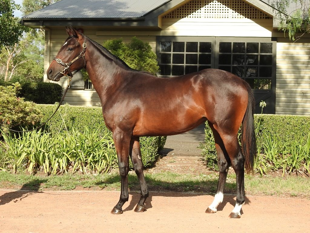 Perfect Peace at 2018 Classic Yearling Sale