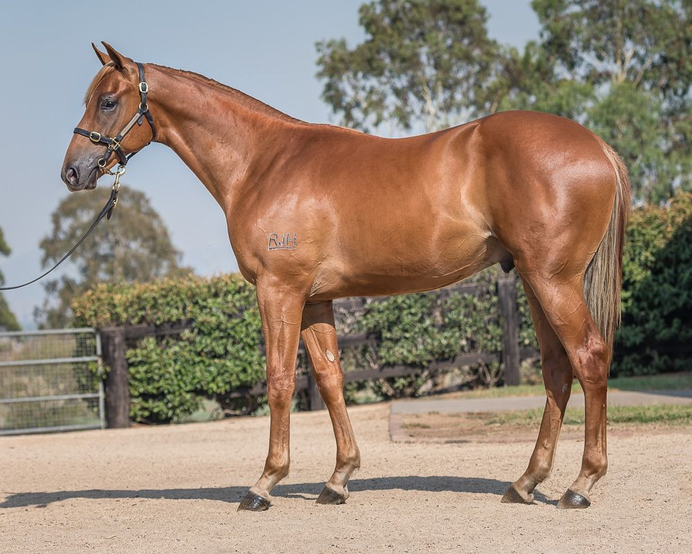 Cloud Factory at 2018 Classic Yearling Sale