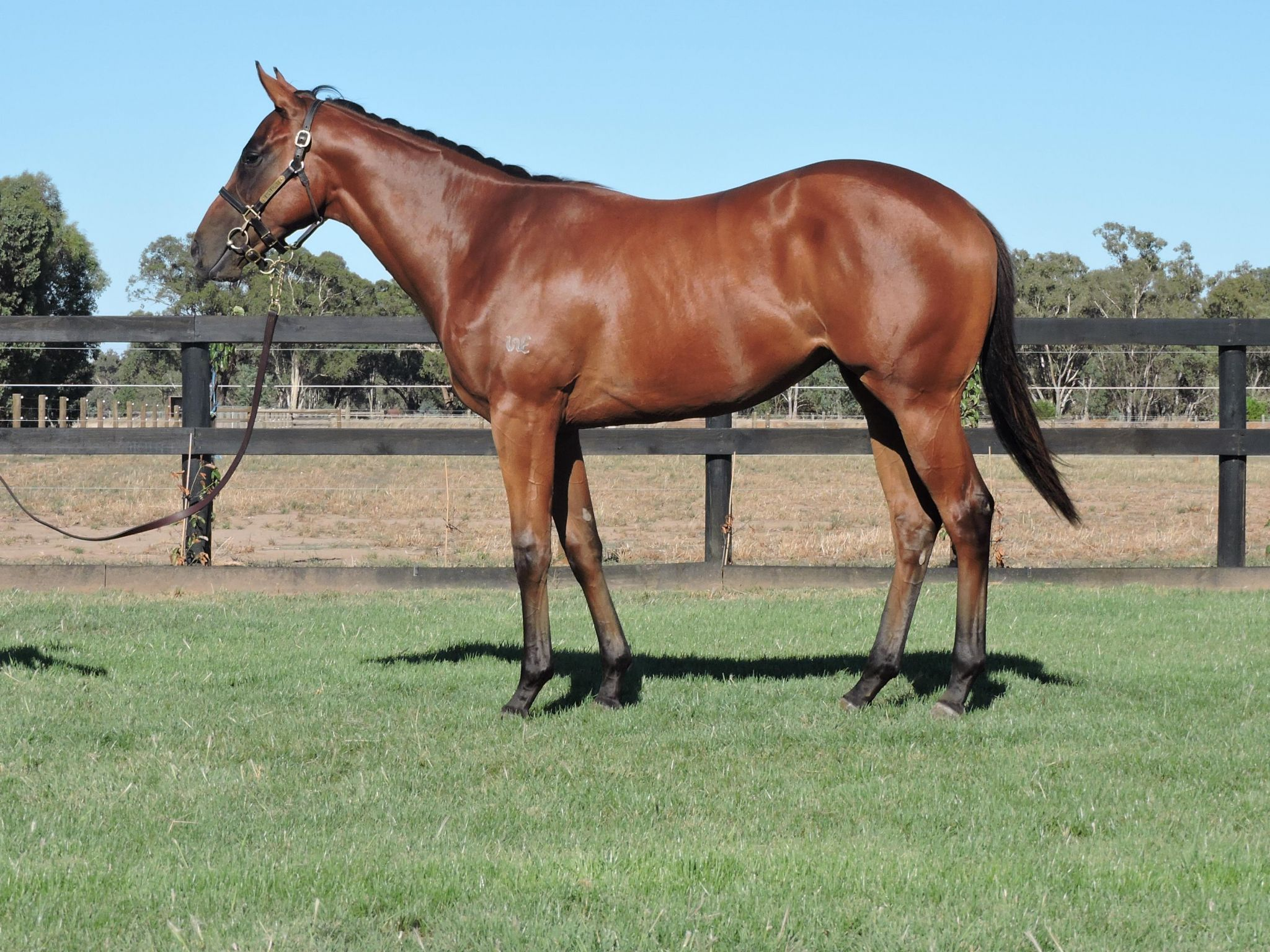 Underground Music at 2018 Classic Yearling Sale
