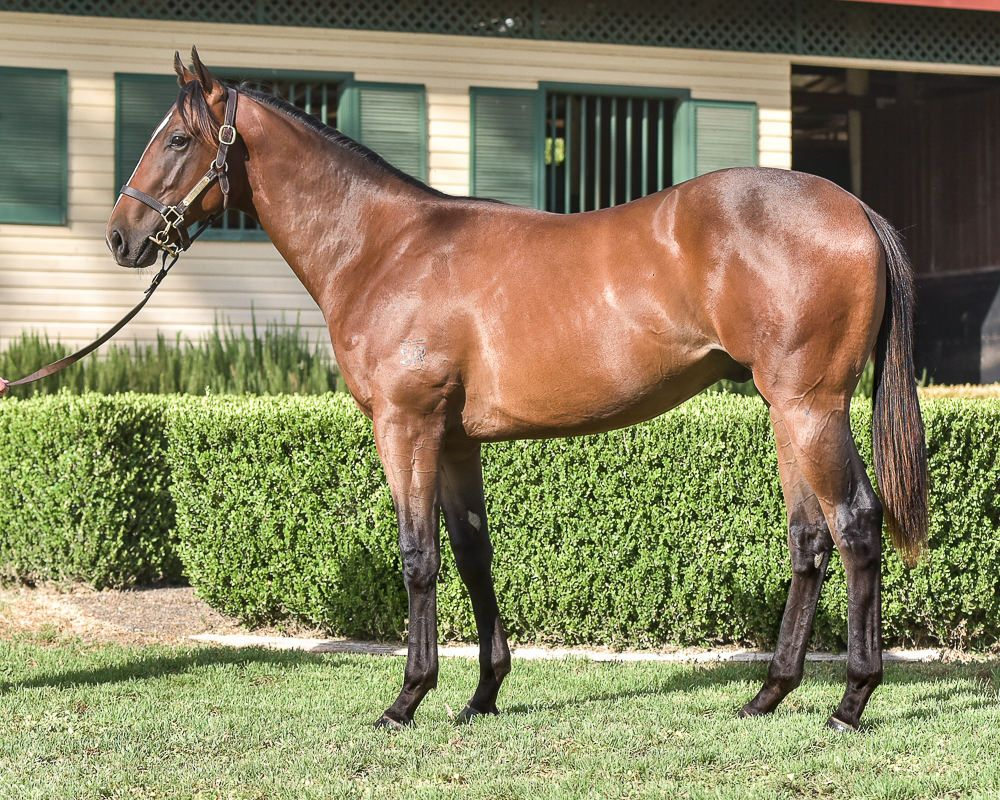 Corcra at 2018 Classic Yearling Sale