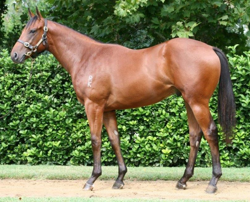 Zelago at 2018 Classic Yearling Sale