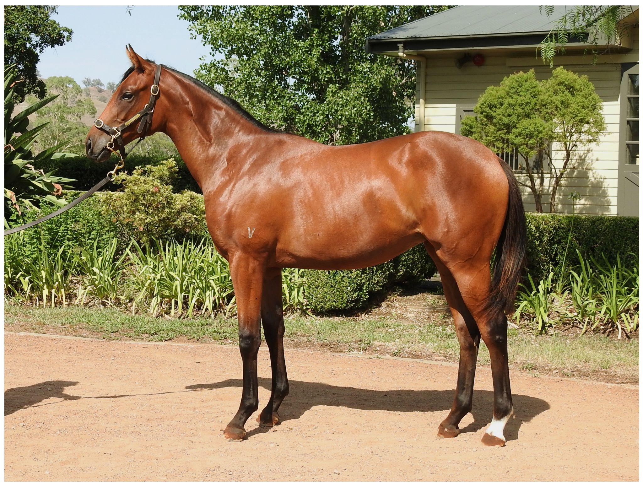 Rich Princess at 2018 Classic Yearling Sale