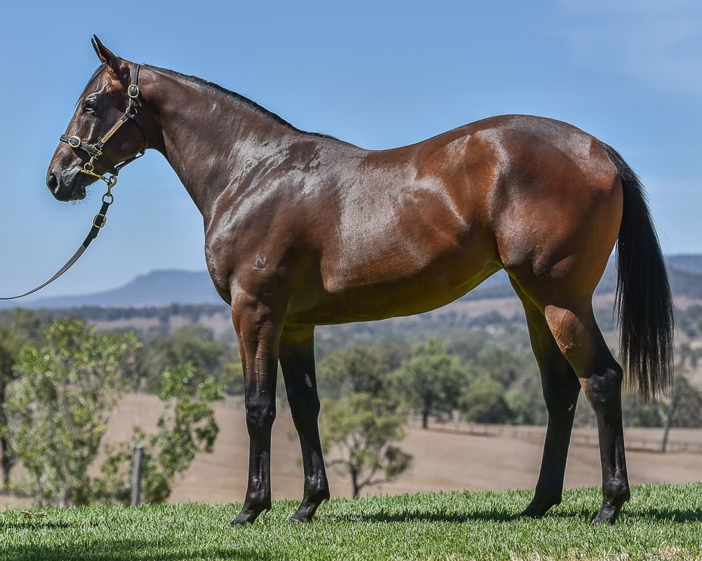 Hearty Lass at 2018 Classic Yearling Sale