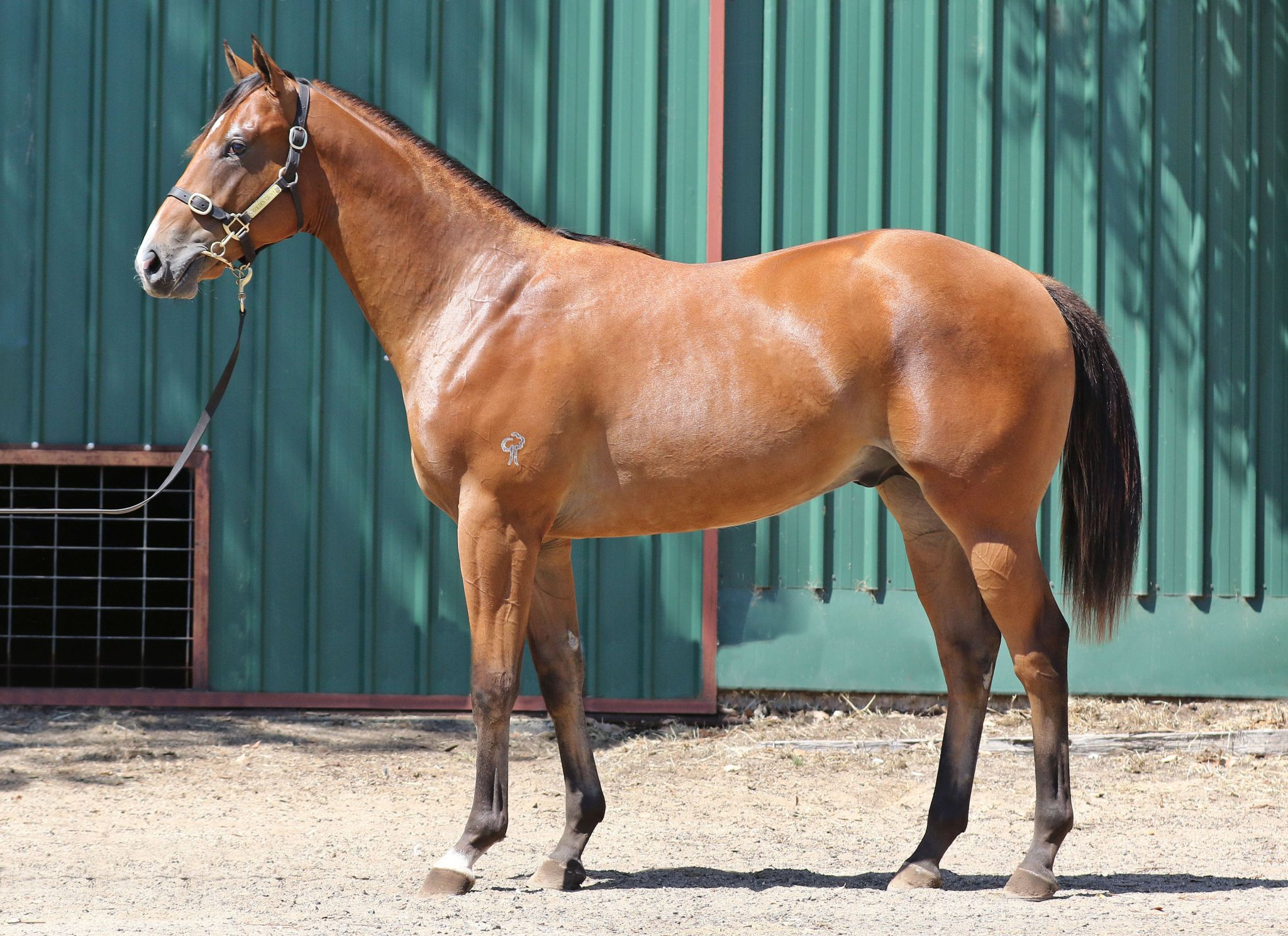 Witness Collector at 2018 Classic Yearling Sale
