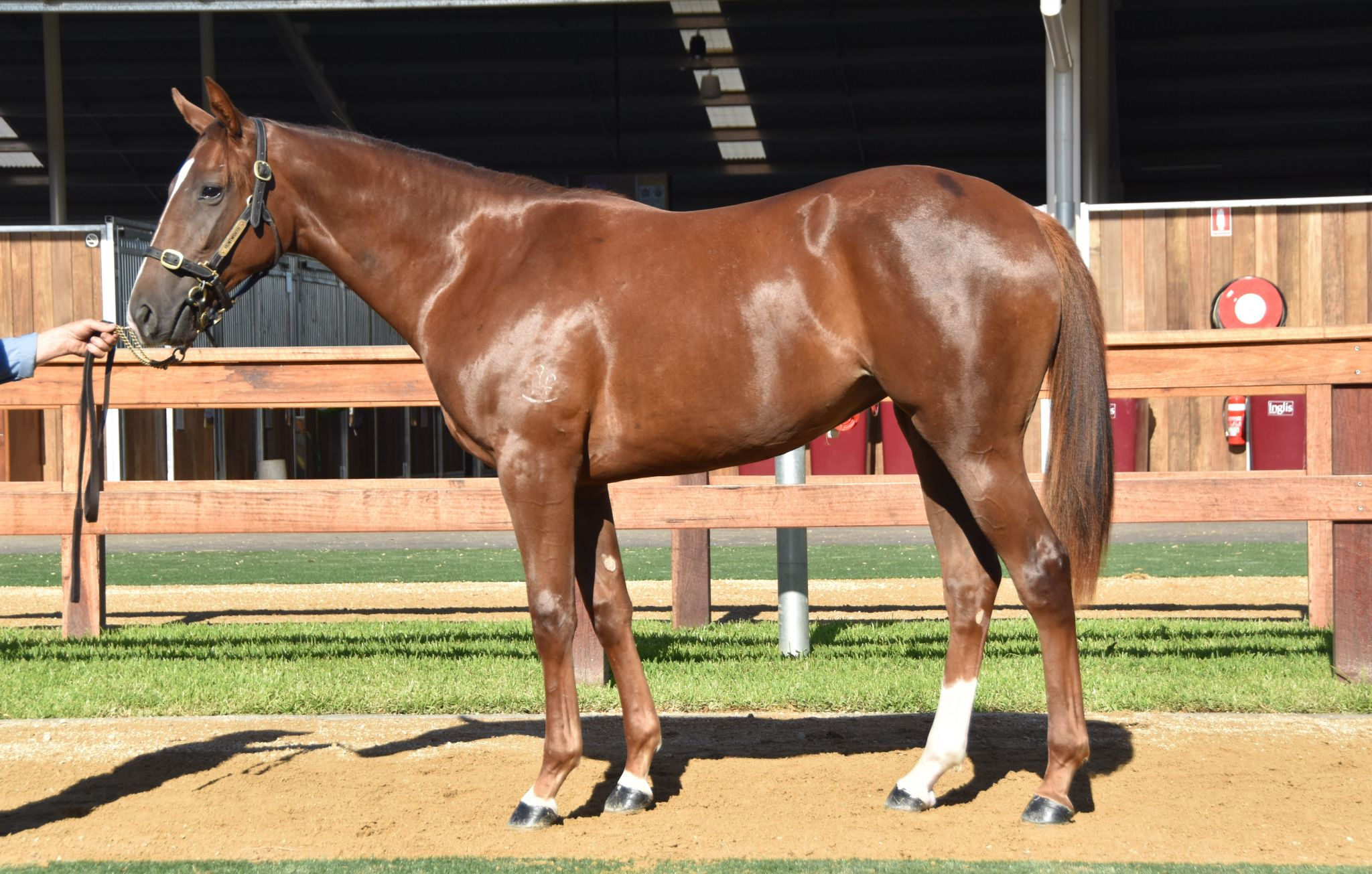 Gatsby's Girl at 2018 Classic Yearling Sale