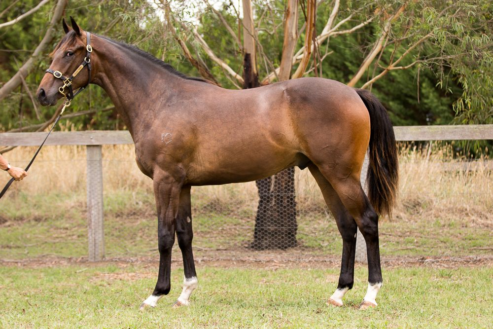 Soami at 2018 Classic Yearling Sale