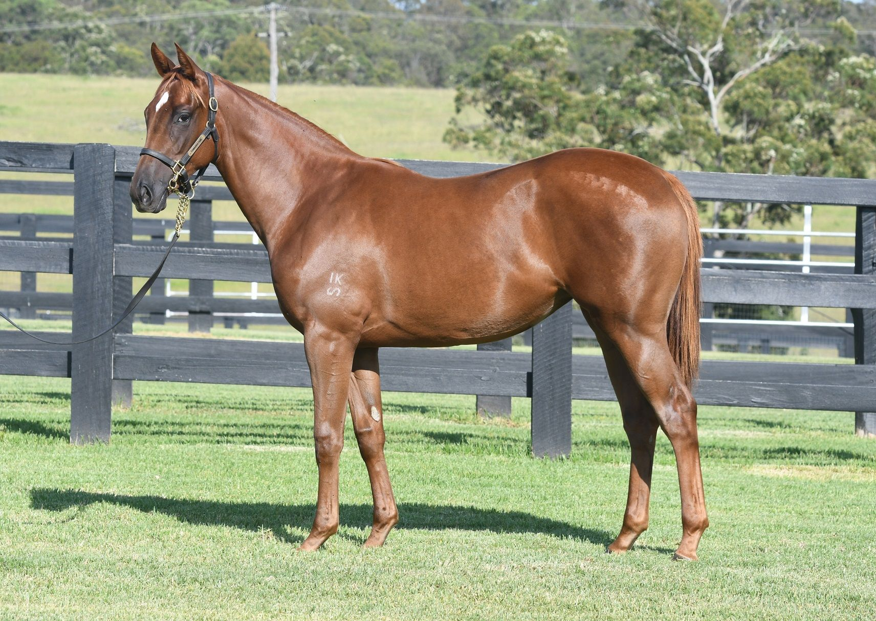Sticking Point at 2018 Classic Yearling Sale