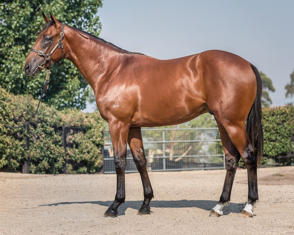 Conquered Zone at 2018 Classic Yearling Sale