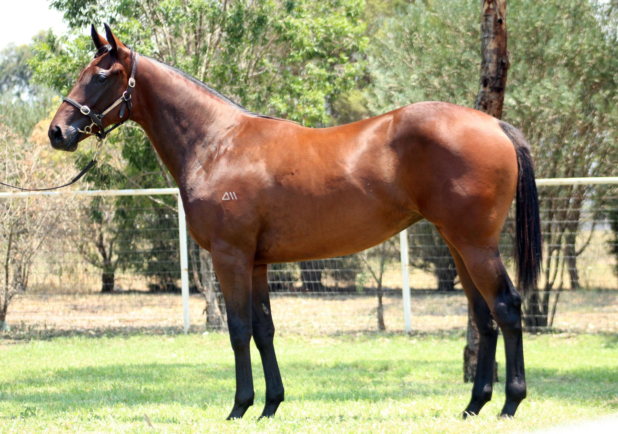 Annie's Missile at 2018 Classic Yearling Sale