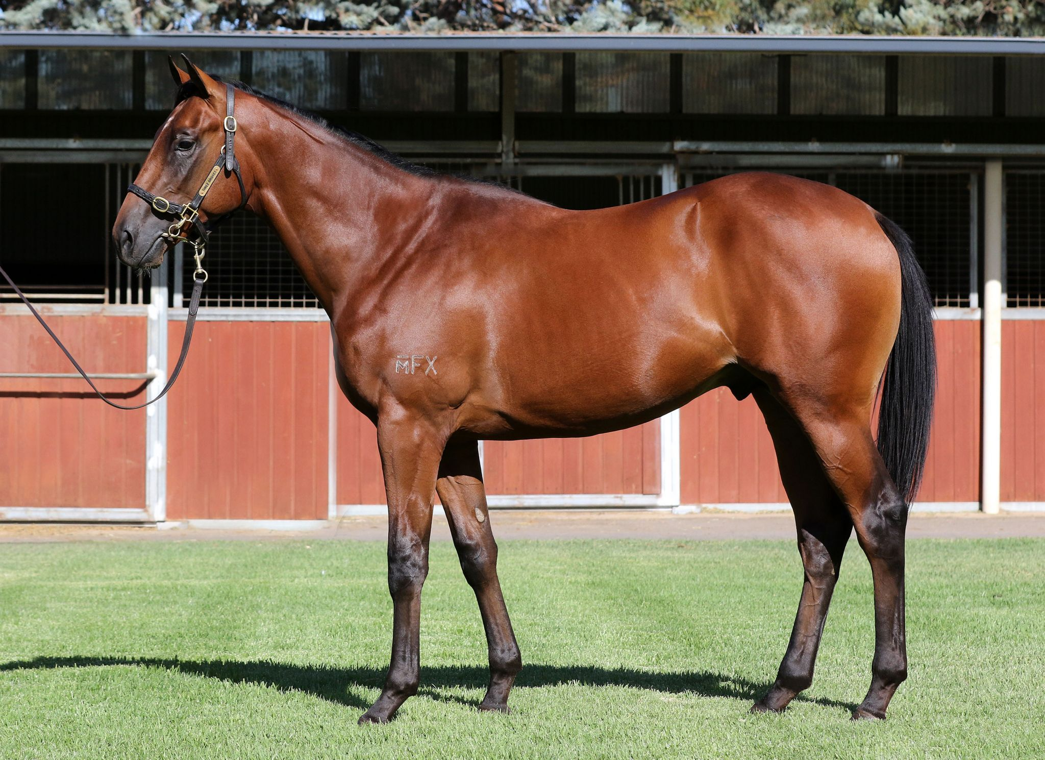 Coolth at 2018 Melbourne Premier Yearling Sale