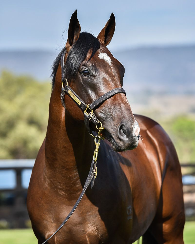 Secretly Awesome at 2018 Melbourne Premier Yearling Sale