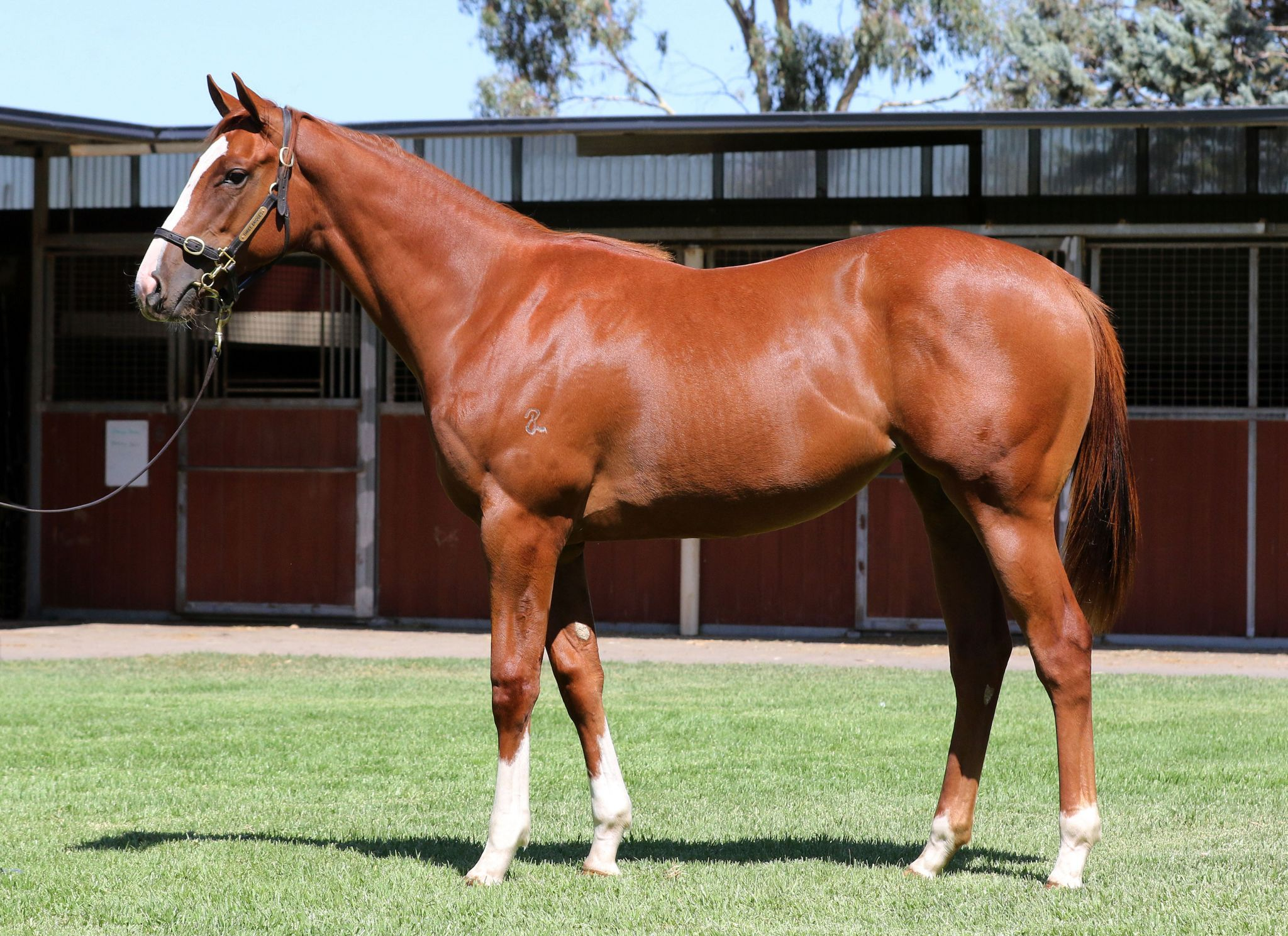 Wild Charlotte at 2018 Melbourne Premier Yearling Sale