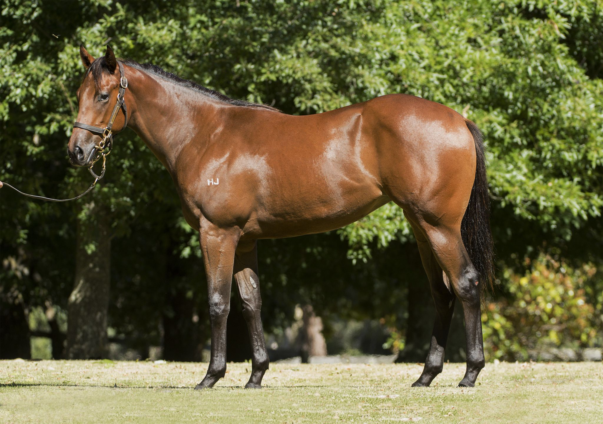 Lady Willow at 2018 Melbourne Premier Yearling Sale