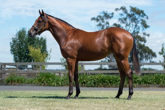 Avon River at 2018 Melbourne Premier Yearling Sale