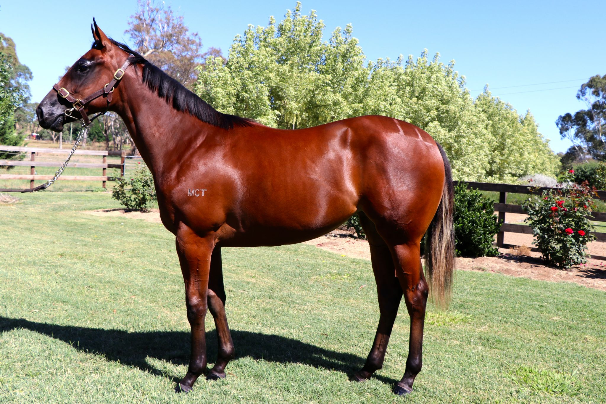 Galgani at 2018 Melbourne Premier Yearling Sale