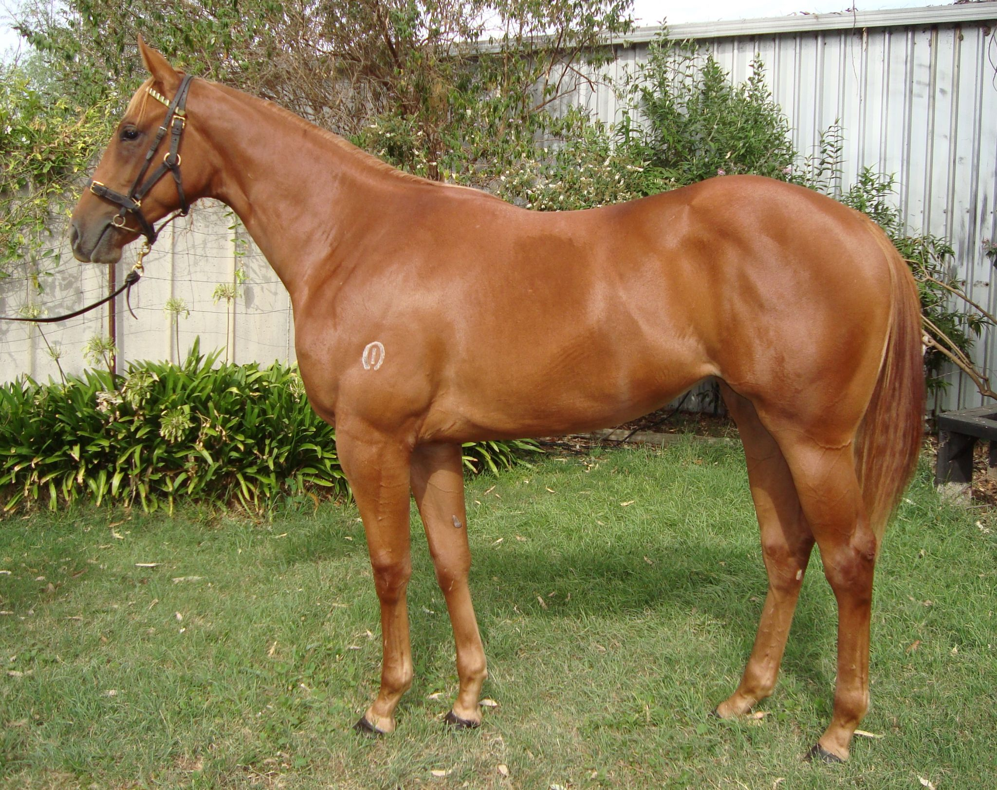 Miss Leila at 2018 Melbourne Premier Yearling Sale