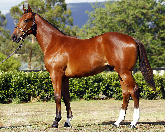I Am Dynamic at 2013 Gold Coast Yearling Sale