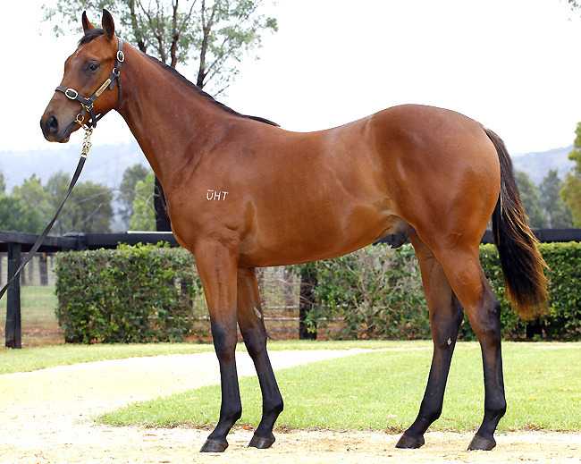 I Am The General at 2013 Gold Coast Yearling Sale