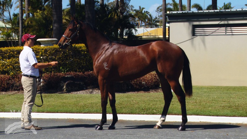 High Cost at 2014 Gold Coast 2yos In Training Sale