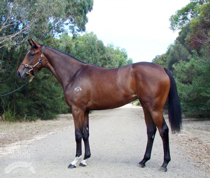 Aali Mia at 2014 Adelaide Yearling Sale