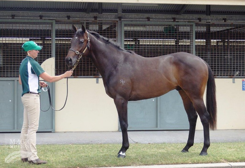 Maxwell at 2015 Gold Coast 2YOs In Training Sale