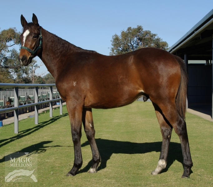 Big Shot Paddy at 2015 Perth Winter Thoroughbred Sale