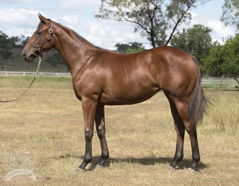 Fatz at 2015 Gold Coast March Yearling Sale