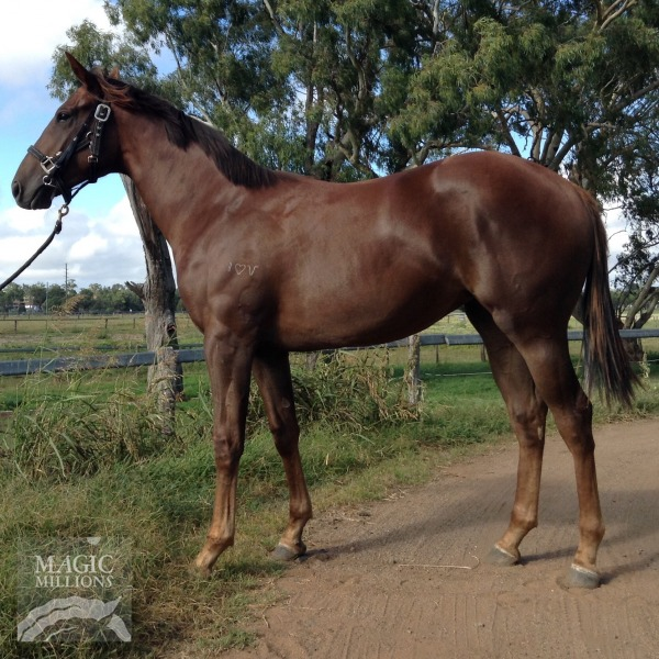 Hidden In Heaven at 2015 Gold Coast March Yearling Sale