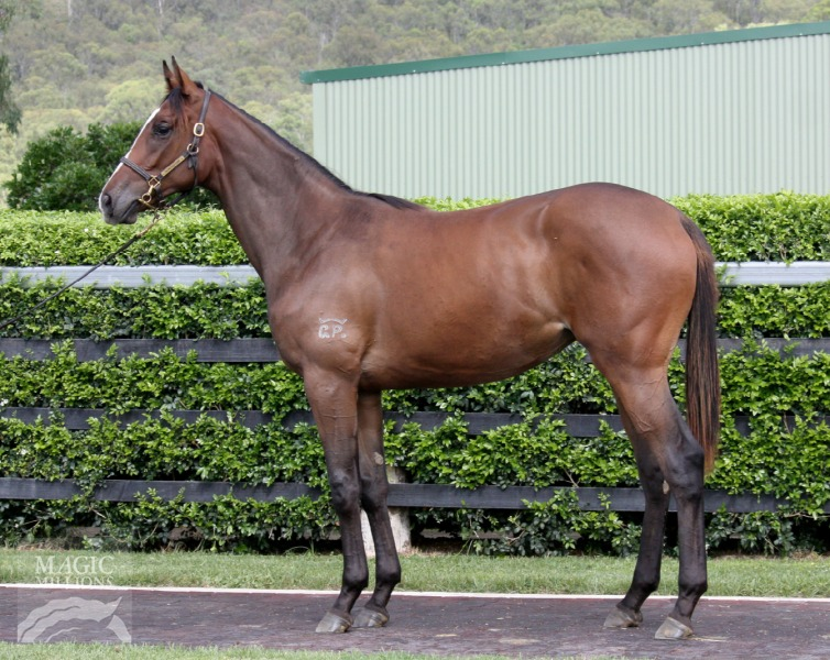 Argento Perlo at 2015 Gold Coast March Yearling Sale