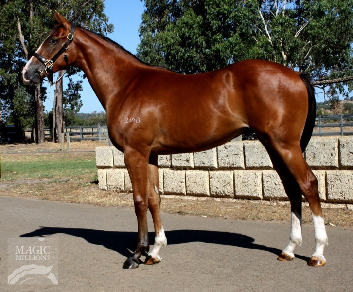 The Divine Wind at 2015 Perth Yearling Sale