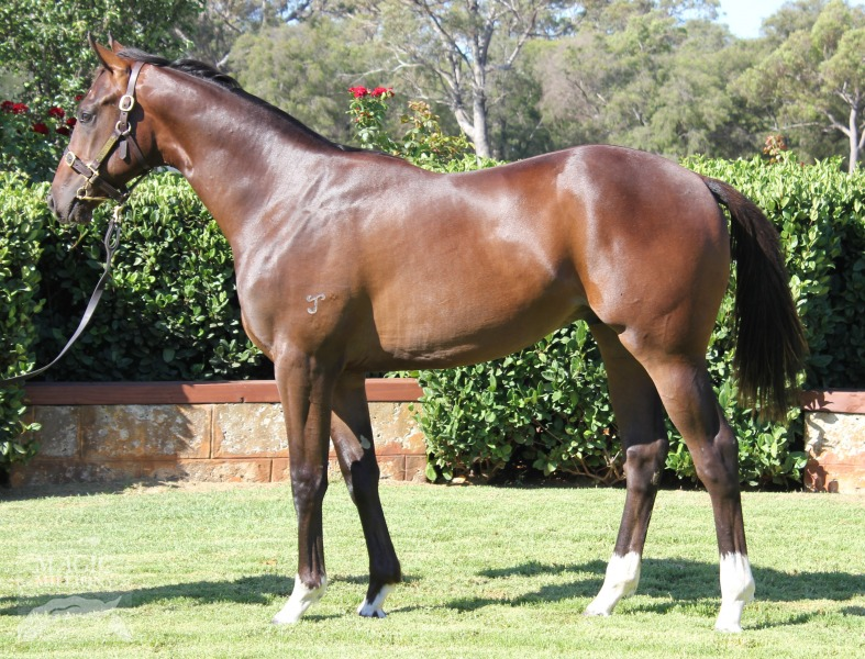 Four White Fox at 2015 Perth Yearling Sale