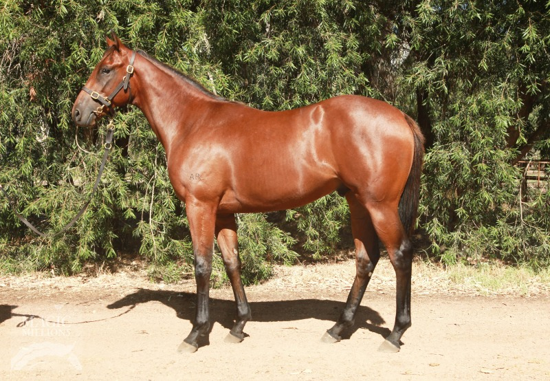 Mycroft at 2015 Perth Yearling Sale