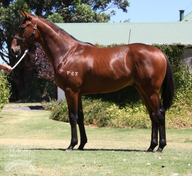 Nevarda at 2015 Perth Yearling Sale