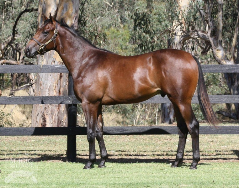 Desert Thorn at 2015 Perth Yearling Sale