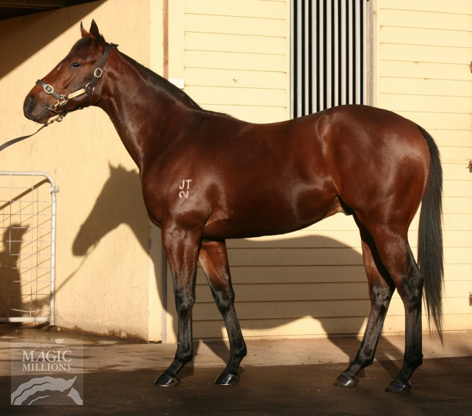 Connery at 2016 Gold Coast National Yearling Sale